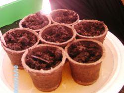 Bepflanzte Torfquelltöpfe