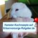 Top Hamster-Rezepte für Krisenvorsorge